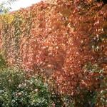 1-Herbst 01